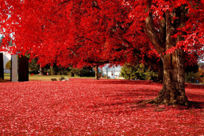 Brilliant Red, Olympia, Washington
