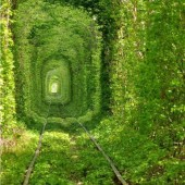 Train Tree Tunnel, Ukraine