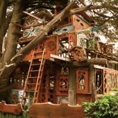 Tree House, Sonoma, California