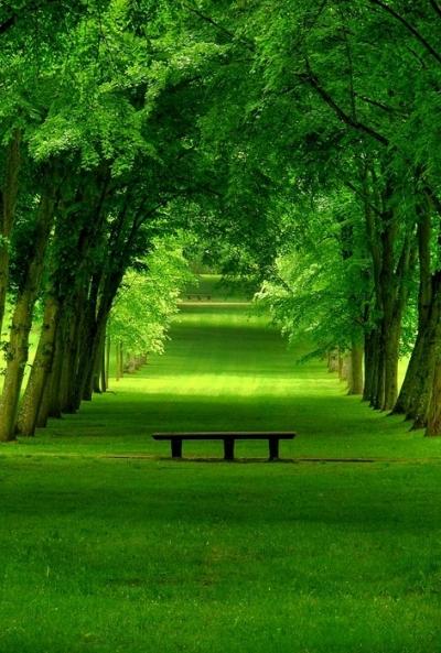Lush Green Park, Chamrande, France