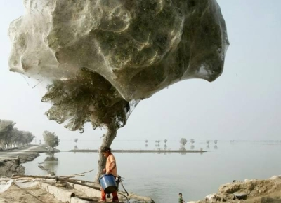 Spider web tree, Pakistan