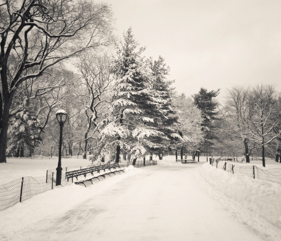 Central Park winter trees covered with snow, New York City