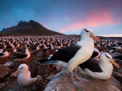 Falkland Islands, South Atlantic Sea, UK