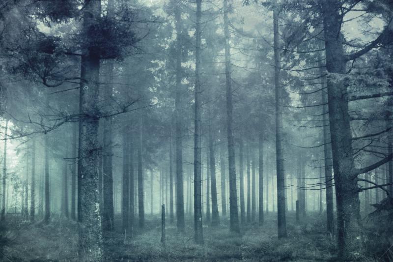 Forest near Longfaye, Liege, Belgium