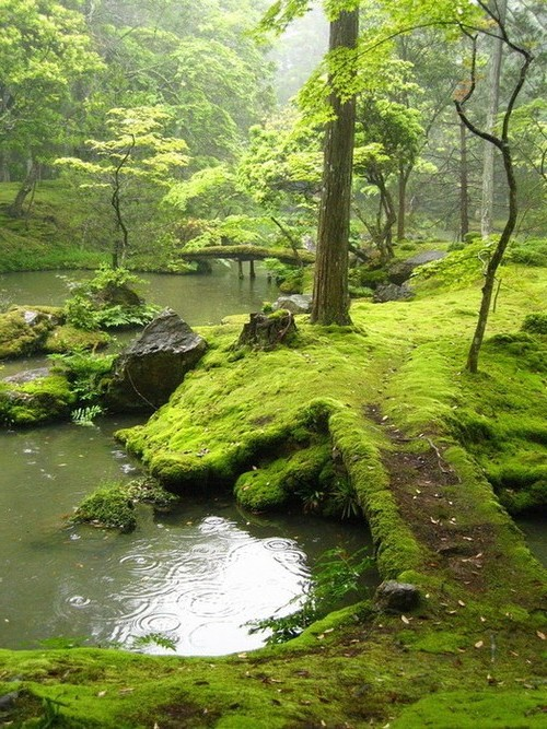 Moss covered bridge, Ireland