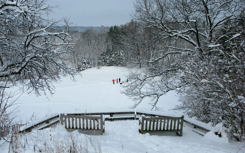 Overlooking skiers and sledders in The Arb