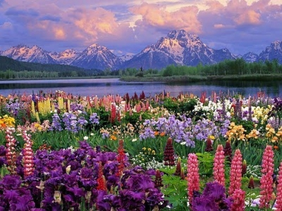 Wild Flowers, The Grand Tetons, Wyoming