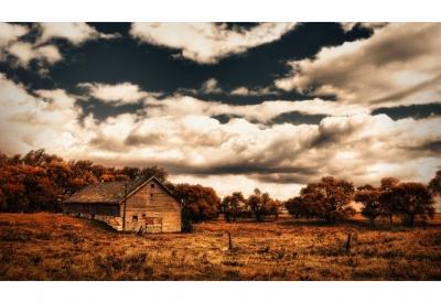 Amber prairie