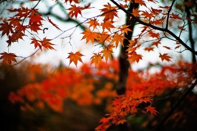 Aomori Prefecture, Japan