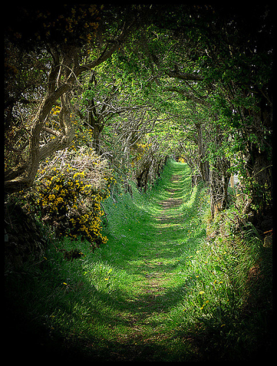 Tree tunnel. Ballynoe, Co Down, Ireland