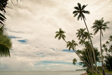 Bunch of palms on Rarotongian harbor, Cook Islands