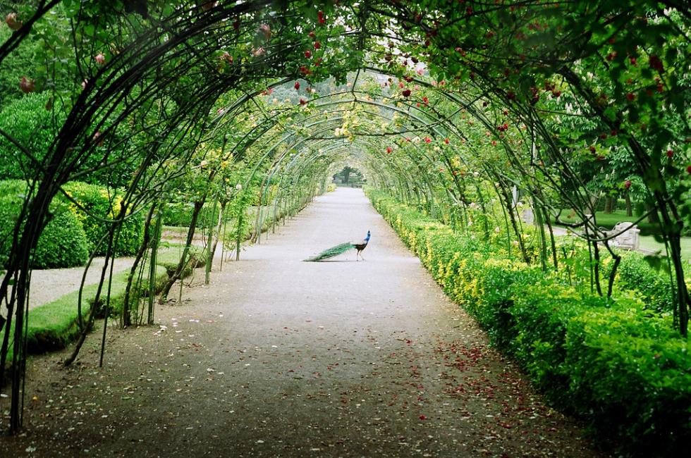 Garden tree tunnel