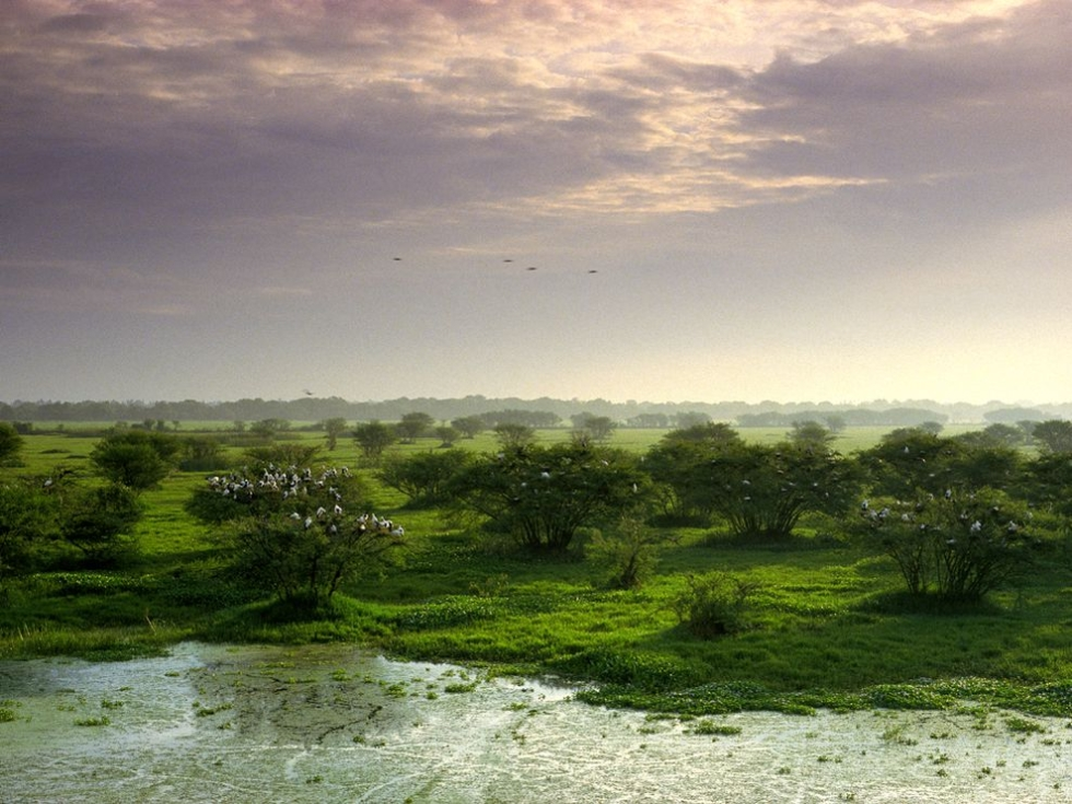Keoladeo National Park, India