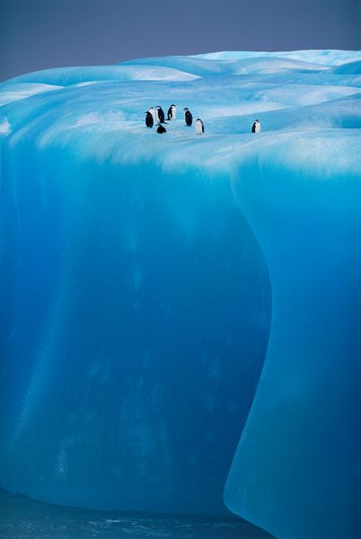 Penguins on ice shelf, Antarctica