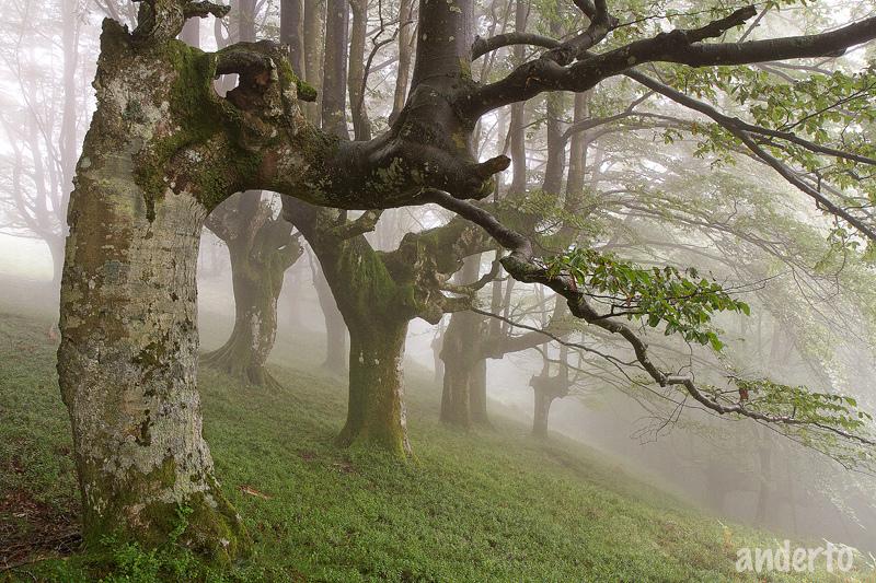 Urigoiti, Basque Country, Spain
