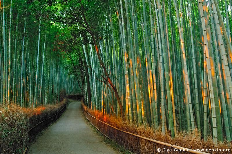 Sagano Bamboo Grove, Arashiyama, Kyoto, Japan