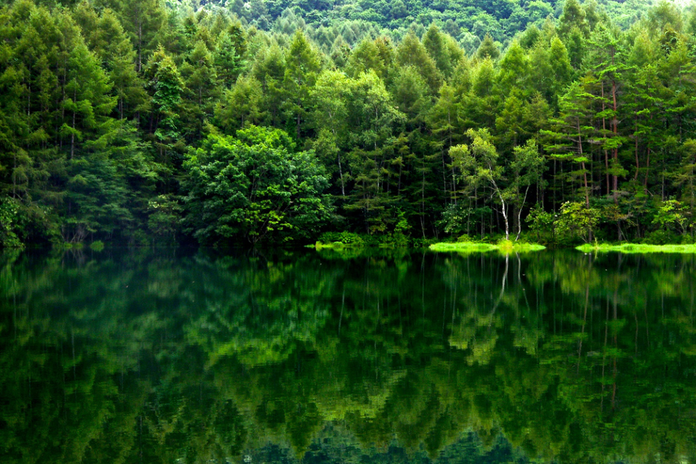 Reflection in Green, Nagano, Japan