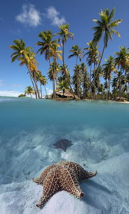 Split-View Starfish, The Maldives