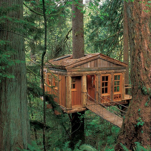A tree house for the big kids