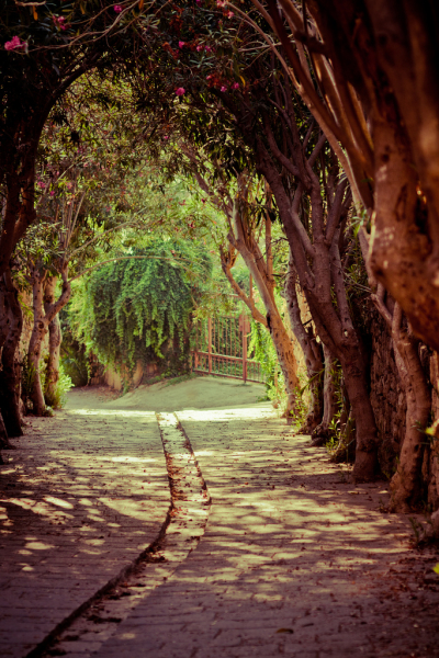 Oleander Lane, Byblos, Lebanon