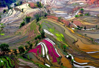 Rice fields, Yunnan, China
