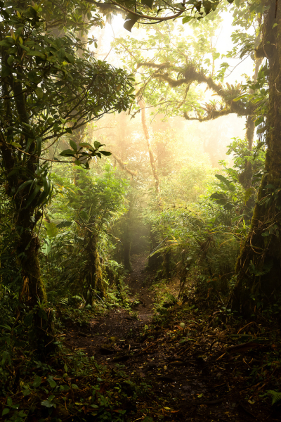Monte Verde Cloud Forest, Costa Rica