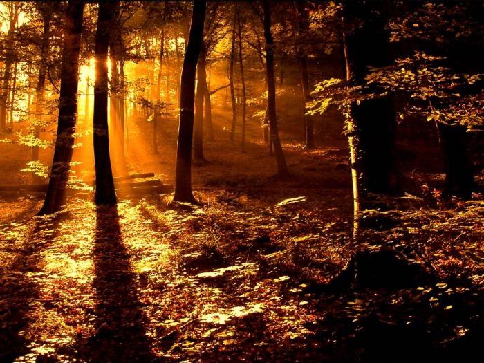 Forest summer sunrise