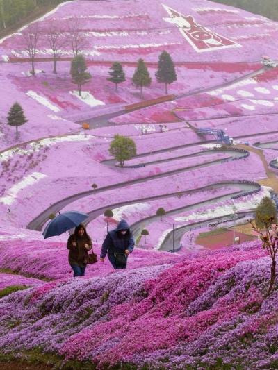 Spring flowers on Hillside, Hokkaido, Japan