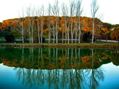 A sunny autumn day in the villa Ada park in Rome, Italy