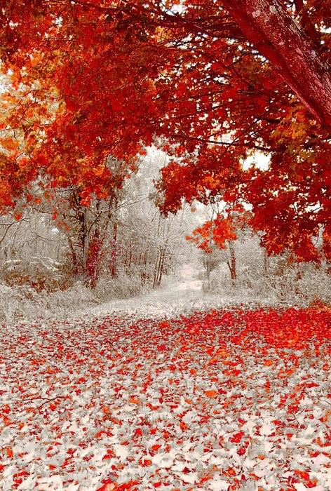 First snow fall in Minnesota