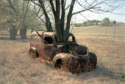 Just a tree growing through a car