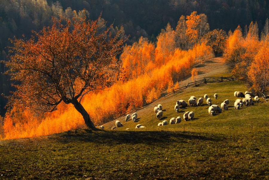 Măgura, Braşov, Romania