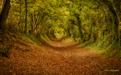 Tree tunnel, Halnaker, West Sussex, England
