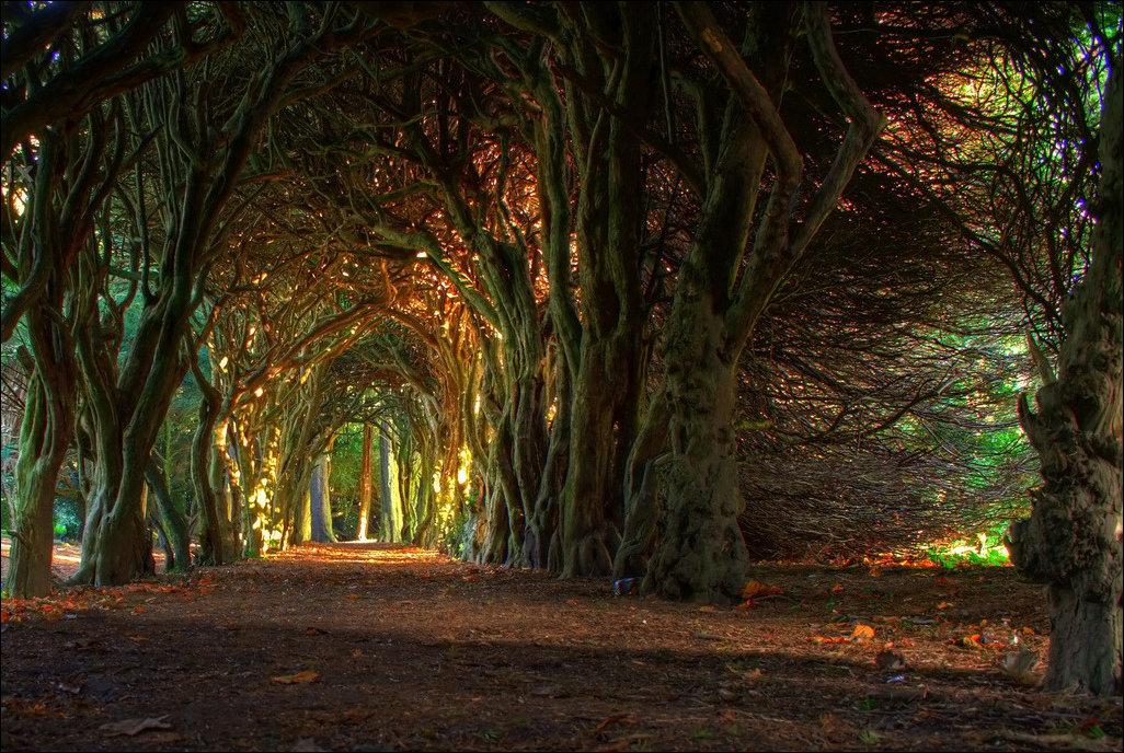 HOÀNG HÔN LẶNG LẺ Tree-Tunnel-Meath-Ireland