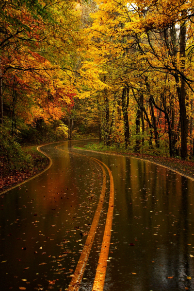 Yellow Leaf Road, North Carolina