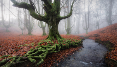 Otzarreta forest, near Vitoria city, Spain