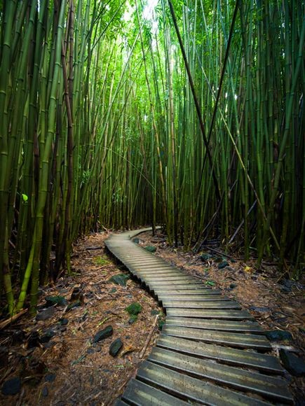 Pipiwai Trail, Bamboo Forest, Maui