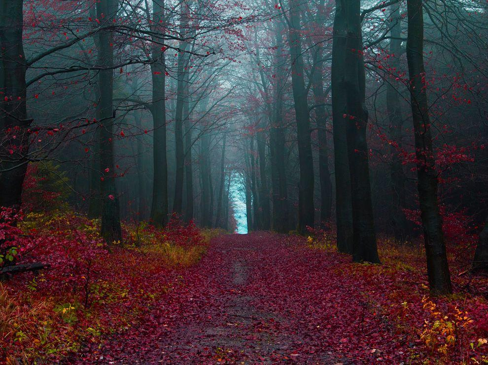The black forest germany