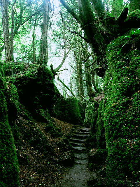 Puzzlewood Forest, Gloucestershire, England