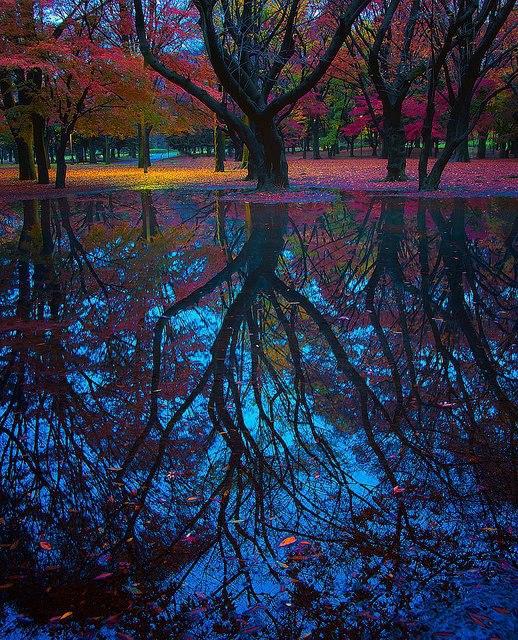 Reflection, Tokyo, Japan