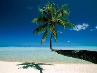 Bora-Bora Palm, French Polynesia