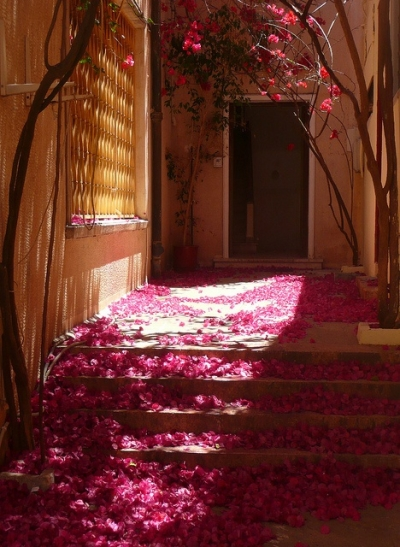 Bougainvillea Petals, Nafplio, Greece