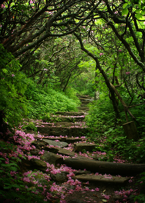 Craggy Gardens, Blue Ridge Parkway, North Carolina photo on ...