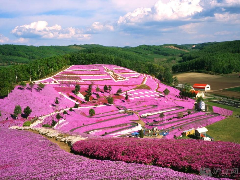 Spring flowers on a hillside, Hokkaido, Japan
