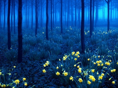 Yellow on Blue, Black Forest, Germany