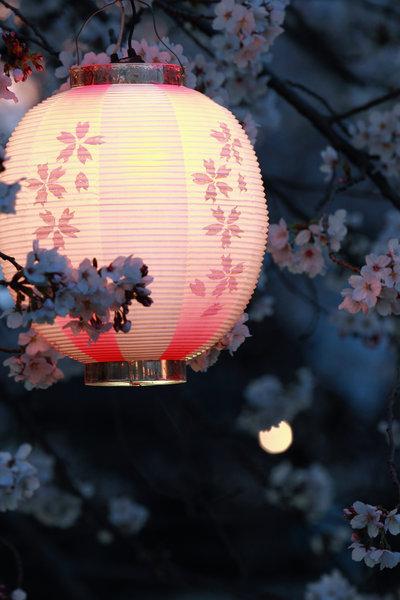 Sakura night, Japan