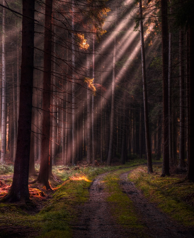 Sun Ray Forest, Czech Republic