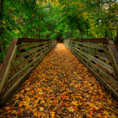 Autumn Bridge, Toronto, Canada