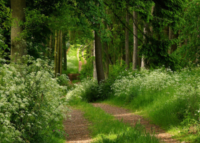 Summer Forest, Herefordshire, England