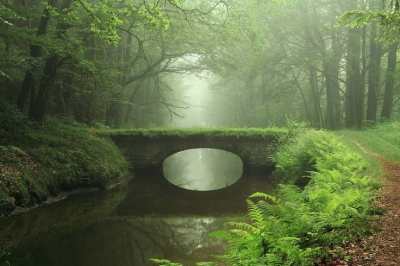Forest Bridge, The Enchanted Wood